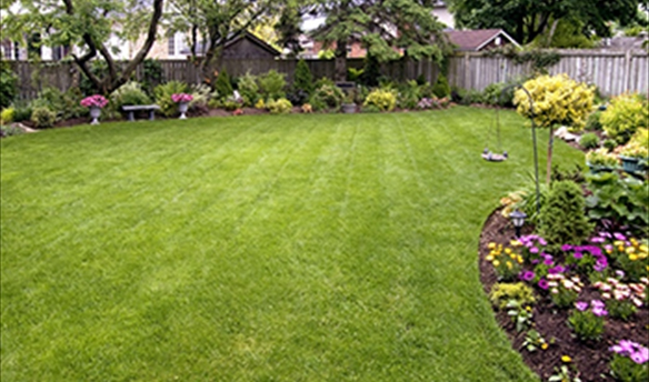 weekly-lawn-care